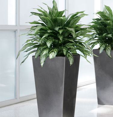 Artificial Plant Code :AP-1