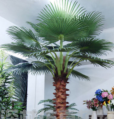 Coco Palm Tree 8 Feet