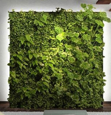 Green Wall Construction
