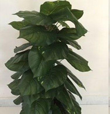 Money Plant Artificial