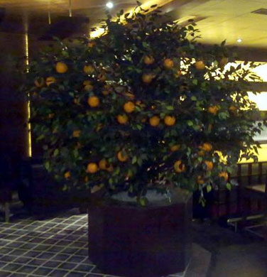 Orange Tree Artificial