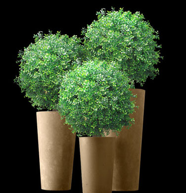 Topiary Ball Plants