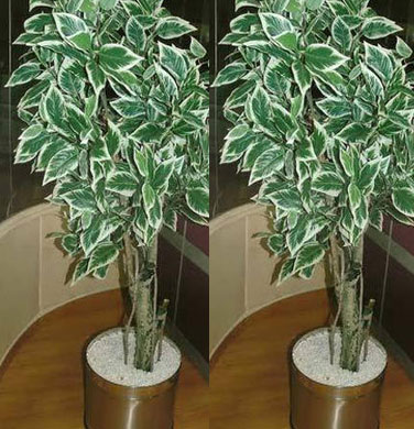 Verigated Ficusl Artificial Trees